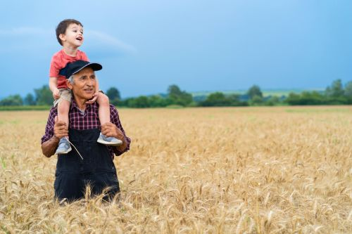 senior farmer showing his grandson a wheat field